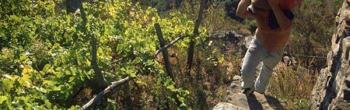 Il Bergese valorizza l'eccellenza enogastronomica ligure a Villa Sauli Podestà